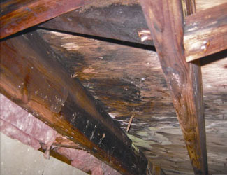 mold and rot in a Superior crawl space